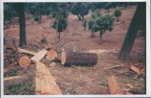 Photo of الجمعية المغربية لحقوق الانسان: المغرب يفقد 30 ألف هكتار من الغابات كل سنة