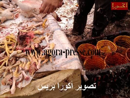 """Photo of ربورطاج مصور: هكذا يذبح وينظف الدجاج بالسوق الاسبوعي """"ثلاثاء"""" سيدي بنور والمصالح المعنية خارج التغطية"""
