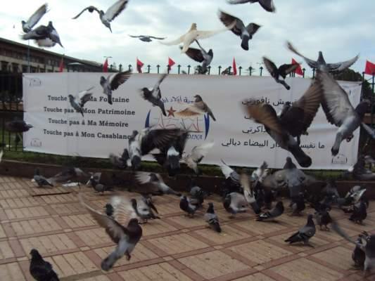 Photo of مافيا العقار بالدار البيضاء ومحاولة إعدام ساحة محمد الخامس