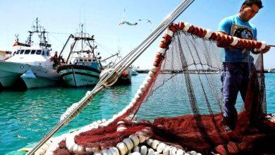 Photo of روسيا والمغرب: زيادة حصص الصيد الروسية إلى 140 ألف طن سنويا