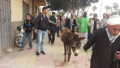Photo of موظف بلدية فقأ عيني حمار أكل ورود البلدية بجرسيف