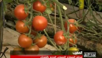 Photo of تقرير.. محاور النموذج التنموي الجديد بالصحراء بالمغربية