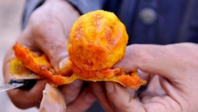 """Photo of بعد الضجة التي أثيرت حول """"الهندية"""".. هذا ما قررته وزارة الفلاحة والصيد البحري"""