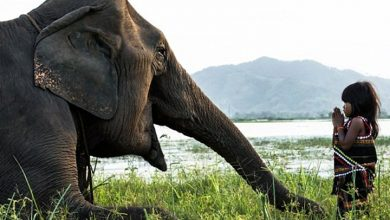 Photo of فيديو مؤثر.. فيل يقتل طفلة عمرها 7 سنوات في حديقة الحيوانات بالرباط