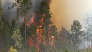 Photo of مصرع أحد عناصر المياه والغابات خلال تدخله لاخماد حريق بإحدى الغابات قرب المضيق