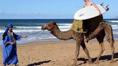 Photo of خلال النصف الأول من سنة 2016 زار المغرب 4,2 مليون سائح