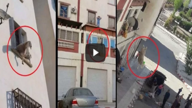Photo of لحظة سقوط كبش من الطابق الثالث دقائق قبل الذبح على المباشر يوم عيد الأضحى