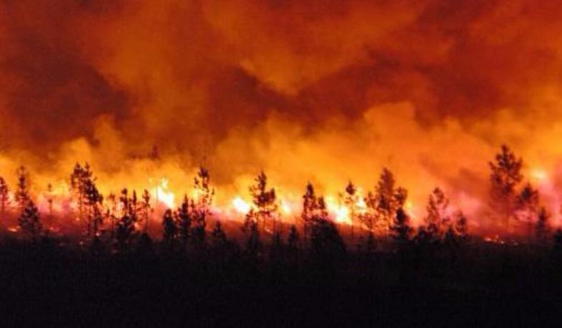 إخماد حريق تسبب في إتلاف ثلث هكتار بغابة كبدانة بإقليم الناظور