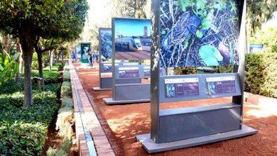 Photo of كوب 22: عرصة مولاي عبدالسلام مزيج بين التكنلوجيا و الحفاظ على البيئة