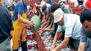 Photo of ارتفاع الكميات المفرغة من منتجات الصيد الساحلي والتقليدي بـ 8% متم نونبر 2016