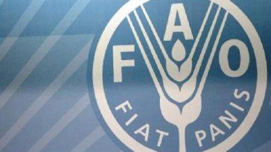 """Photo of منظمة الأغذية والزراعة (فاو) تصف التعاون مع المغرب ب""""المثمر"""""""