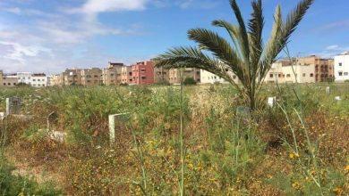 Photo of مقبرة الشلح بالدار البيضاء: حشرات وانعدام النظافة ونباتات غطت ملامح المقابر