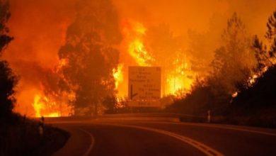 Photo of بالفيديو: 62 قتيلا في حريق هائل وسط البرتغال والحكومة تعلن الحداد 3 أيام