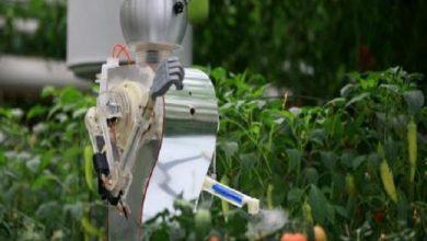 Photo of روبوت يقاوم الآفات الزراعية بواسطة الليزر