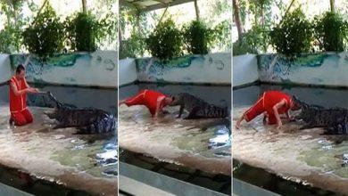 Photo of فيديو… تمساح يعض رأس حارس الحديقة أمام الجمهور!