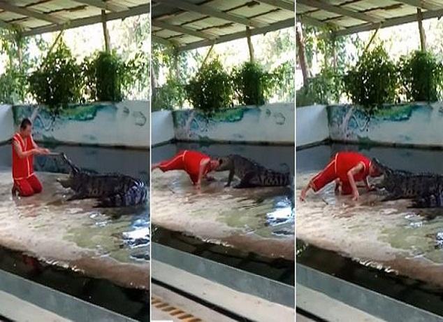 فيديو… تمساح يعض رأس حارس الحديقة أمام الجمهور!