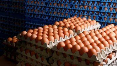 Photo of تقرير.. ألمانيا استوردت أكثر من 28 مليون بيضة ملوثة بمبيد فيبرونيل