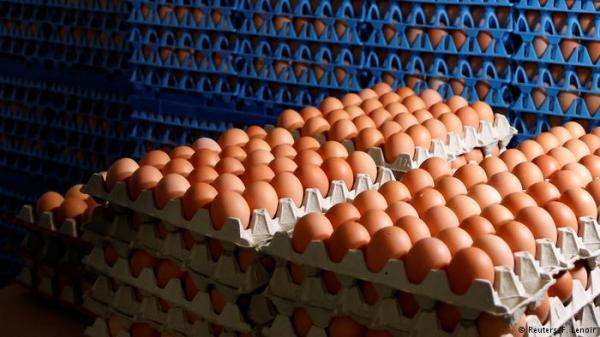 تقرير.. ألمانيا استوردت أكثر من 28 مليون بيضة ملوثة بمبيد فيبرونيل