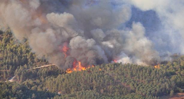 الحسيمة.. حريق يأتي على أزيد من أربعة هكتارات من غابة بوسكور