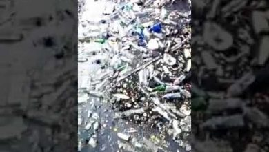 Photo of فيديو: فضيحة.. كارثة بيئية بميناء الداخلة ومندوبية الصيد البحري خارج التغطية
