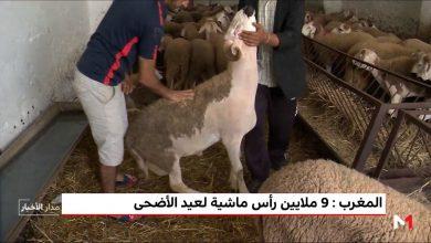 Photo of فيديو: المغرب.. 9 ملايين رأس ماشية لعيد الأضحى