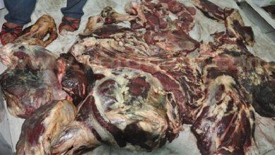 Photo of بيئيون: حقن وأعلاف ممزوجة بفضلات الدجاج قد تكون سبب تعفن لحوم الأضاحي