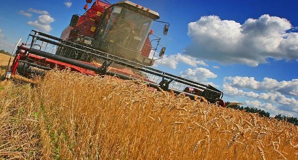إنتاج الحبوب بلغ 96 مليون قنطار خلال الموسم الفلاحي 2016- 2017