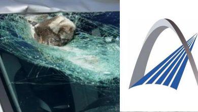"""Photo of وزارة التجهيز تجد حلا للحد من """" الاعتداءات المتكررة بالطرق السيارة """""""