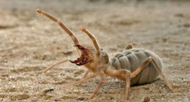 علماء روس يتوصلون إلى ان علاج الشلل في سم العناكب
