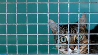 Photo of القط ذلك الحيوان الأليف الذي يخلص مربيه من بعض الأعراض والتوترات النفسية