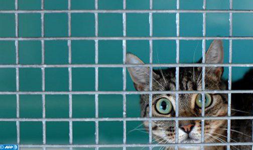 القط ذلك الحيوان الأليف الذي يخلص مربيه من بعض الأعراض والتوترات النفسية