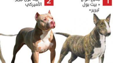 Photo of هذه تفاصيل القانون: إحذر امتلاك هذه الكلاب يؤدي بك إلى السجن والغرامة