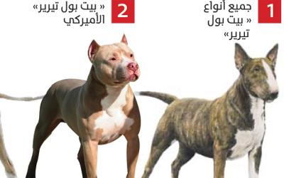 هذه تفاصيل القانون: إحذر امتلاك هذه الكلاب يؤدي بك إلى السجن والغرامة