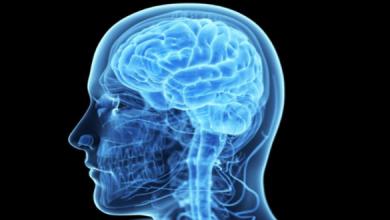Photo of اكتشاف خلية جديدة بالمخ تميز الإنسان عن باقي الكائنات