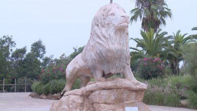 Photo of الحافي : المغرب يأمل في إدماج التدبير الوراثي في سياسته المتعلقة بحماية الغزلان