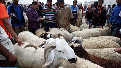 Photo of عيد الأضحى 1440: ترقيم حوالي 7 ملايين و400 ألف رأس من الأغنام والماعز