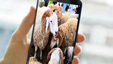 Photo of عيد الأضحى: إقبال متزايد على اقتناء الأضحية عبر الانترنت