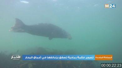 Photo of فيديو: تصوير فقمة رمادية تصفق بزعانفها في أعماق البحار