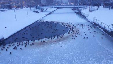 """Photo of الفنلنديون يتساءلون: هل """"ألغي"""" فصل الشتاء هذه السنة في جنوب البلاد؟"""