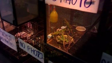 Photo of فيديو وصور: مشاهد سرية مخيفة من سوق تجارة الحيوانات البرية  وتوقعات بوفاة 60 مليون شخص بسبب كورونا