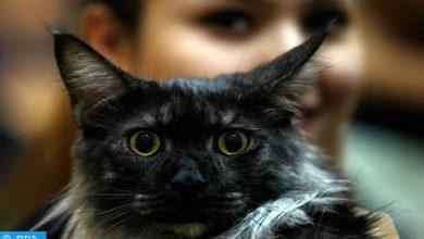 "Photo of ""لا دليل"" على إمكان نقل الحيوانات عدوى كورونا للبشر"