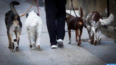Photo of فيروس كورونا: هل يمكن أن تصاب به الحيوانات وتنقله ؟