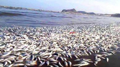 Photo of وزارة الفلاحة تكشف سبب نفوق أسماك ببحيرة سيدي بوغابة