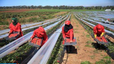 """Photo of إعادة العاملات المغربيات اللواتي يشتغلن ب""""هويلفا"""" ابتداء من يوم السبت"""