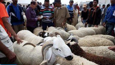 Photo of وزارة الفلاحة تعلن إغلاق بعض أسواق الماشية