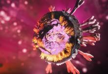 Photo of خبراء يزعمون أن طفرة فيروس كورونا الجديدة أكثر عدوى!