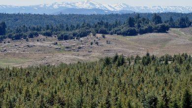 "Photo of يوم إعلامي حول استراتيجية ""غابات المغرب 2020-2030"""