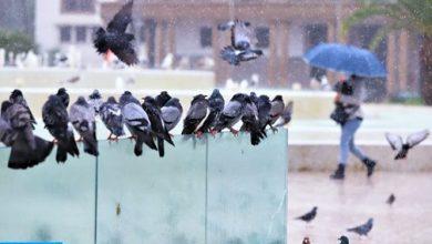 Photo of زخات رعدية قوية ورياح قوية يومي الأربعاء والخميس بعدد من أقاليم المملكة