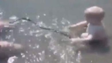 Photo of خطير: طفل روسي يلعب بأفعى الكوبرا