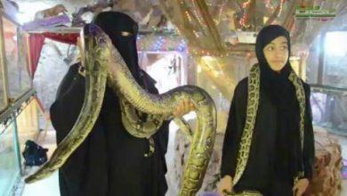 Photo of فيديو : إمرأة سعودية تهرب من الفقر الى تربية الثعابين